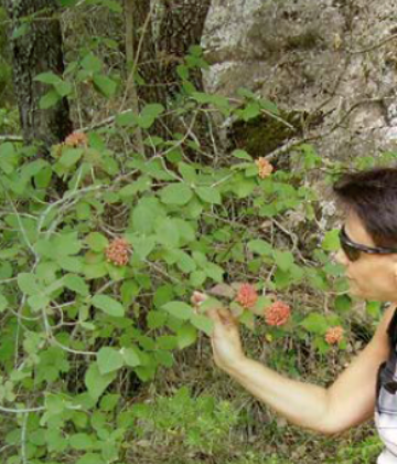 Guided walking tours to discover the vegetation and fauna