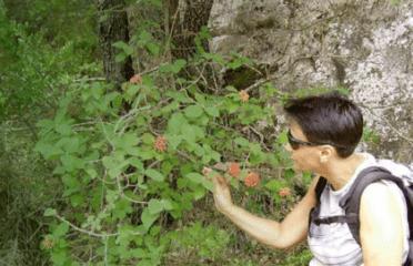 Itinéraires guidés à pied pour découvrir la végétation et la faune