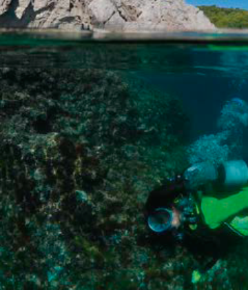 Discover the seabed around the Medes Islands